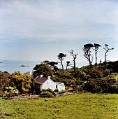 View of trees and house in Herm, Channel Island, Europe