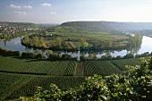 Aerial view of vineyards of Neckar at Mundelsheim, Germany