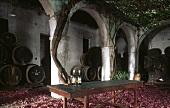 Barrels of sherry in courtyard of Bodega