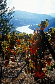 View of vineyard and Douro River in Portugal