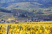 View of beautiful landscape with village Ribeauville in Alsace, France
