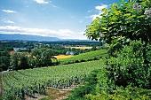 Panoramablick über das Rhone-Tal bei Peney-Dessus am Genfer See