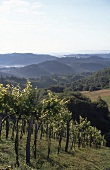 View of vineyards in Styria, Austria
