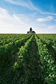 Reblandschaft im Burgund: mit einer romanischen Kirche