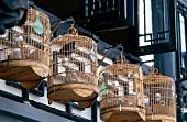 Ziervögel hängen in Vogelkäfigen außen an den Häusern in Shanghai