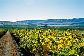 Ciel du Cheval: Weinlandschaft in Columbia Valley
