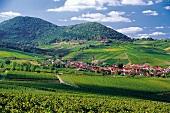 Weinlandschaft in Birkweiler, Pfalz