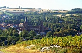 View of vineyards in Palatinate, Germany
