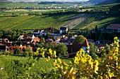 View of vineyards in Palatinate, Sonnenberg, Leinsweiler