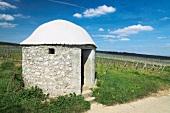 Cottage in riesling vineyard at Rheinhessen, Germany