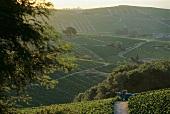 Weinberge in Frankreich, Chiroubles Traktor