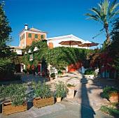 Hotel Los Naranjos bewachsen und umgeben von Palmen, blauer Himmel.