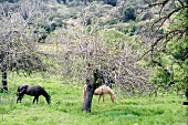 Two horses standing on green meadow near trees
