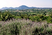 View of meadows, fields and mountains in Majorca island, Spain