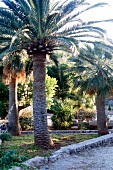 Palm trees in elegant garden of Son Bleda hotel in Soller, Spain