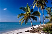 Blick auf das Meer und den Strand mit Palmen in Südindien