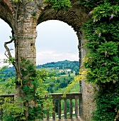 View of vineyards in Conte Collalto