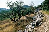 Rustic dirt track on Lastovo island in Croatia