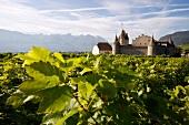 Chateau d'Aigle in der Schweiz, Weinbau-&Weinetikettenmuseum