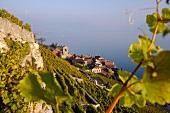 Blick auf Saint-Saphorin am Genfer See, Schweiz