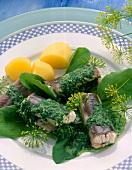 Aal grün in Dillsauce mit Kartoffeln und Kräutern auf Teller
