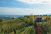 Blick über Weinstöcke am Weinberg auf die Rhone, Berge, Haus, grün