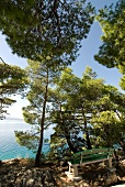 View of sea, coastal road, tall trees and bench