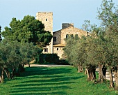 View of Steinburg avenue of olive trees