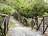 Stone bridge and path on Pelion Mountain, Eastern Magnesia, Greece