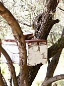Beekeeping box on tree, Pelion Mountain, Eastern Magnesia, Greece