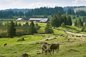 View of Hotel Hormoss Alpe and cattle grazing in meadow, Bavaria, Germany