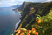 Madeira: Atlantik, wilde Felsenküste grün bewachsen, malerisch