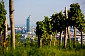 View of Millennium Tower from vineyard in Vienna, Austria
