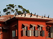 Birds sitting on red wood rooftop at Bosphorus shore, Istanbul, Turkey