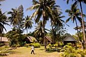 View of small huts and palm trees at Ko Phi Phi Island, Thailand