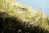 Close-up of grass in meadow in Murradweg, Styria, Austria