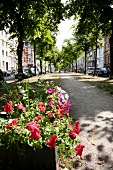 View of the green centre strip of Oppenhoffallee in summer with flowers, Aachen, Germany