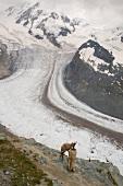 Wallis, Gornergletscher, Gämse im Vordergrund