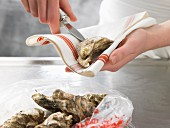 Oysters being opening in a tea towel