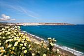 Kreta: Blick auf Sitía, Bucht, Gänseblümchen, malerisch