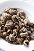 Close-up of schnorkel snails on plate