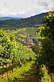 Schwarzwald: Altschweier, Land- schaft, Weinanbau, Kirche