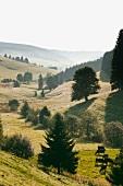 Schwarzwald: Hochschwarzwald, Hügellandschaft, Nebel, malerisch