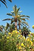 Palm tree in Botanical Garden, Barcelona, Spain