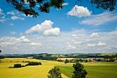 Sachsen: Hügellandschaft bei Hennersdorf, Felder, gelb-grün