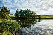 Sachsen: Landschaft, See, Ufer, Bäume, Weide, grün, idyllisch