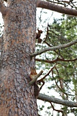 Low angle view of squirrels on a tree