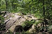 New York: Inwood Hill Park, Felsen, Wald, grün, sommerlich