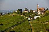 View of wine landscape over the Belbo valley in Piedmont, Italy