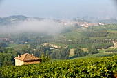 View of wine landscape in morning with fog at Priocca, Piedmont, Italy